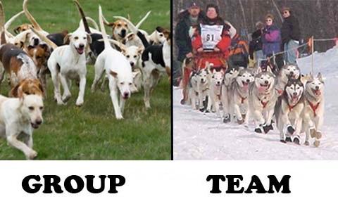 phan-biet-group-va-team